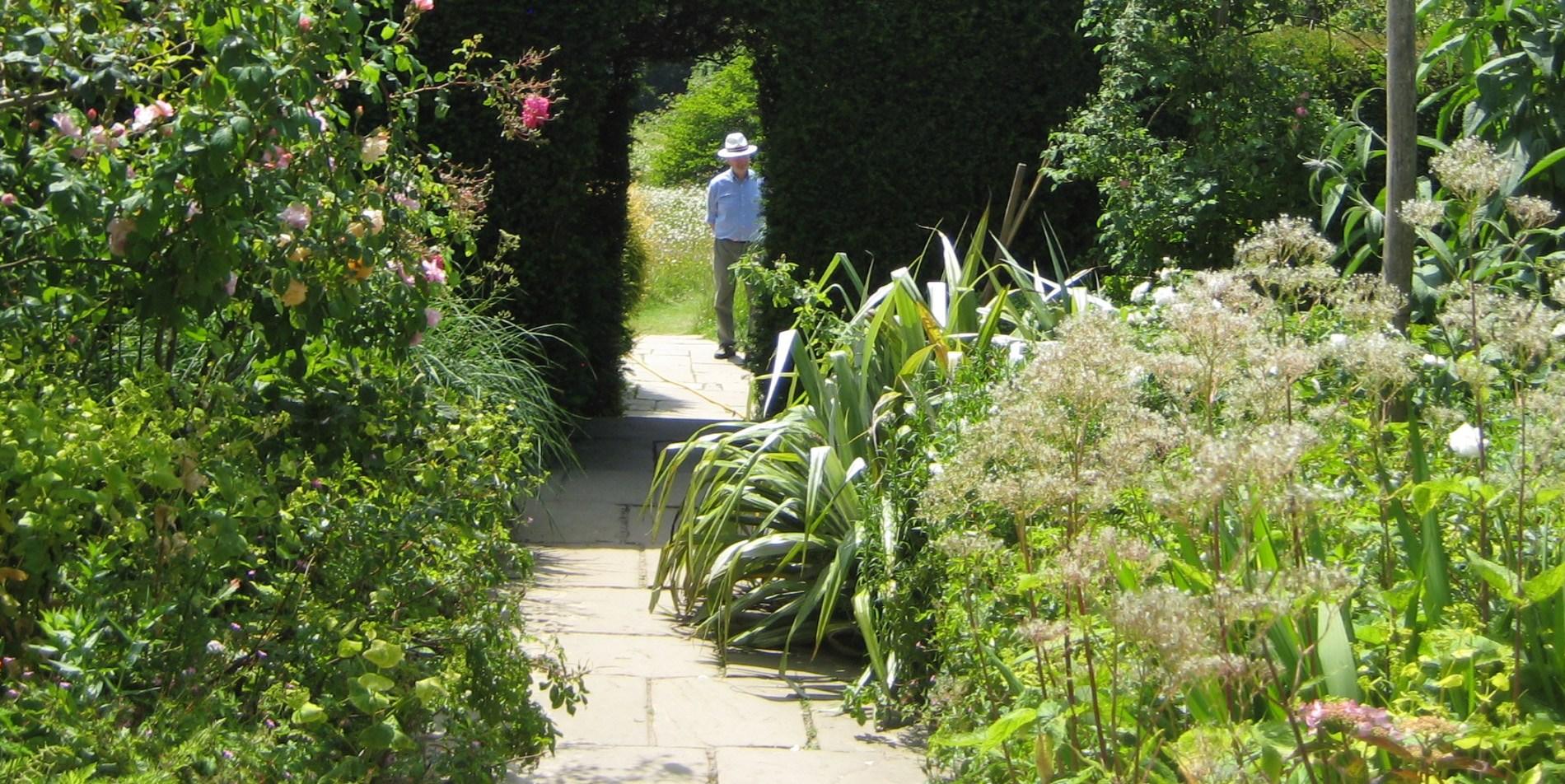 foto van een oude man, wandelend in mooie tuin