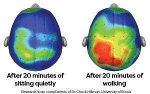 Breinonderzoek wandelen University Illinois